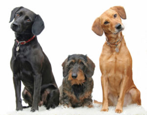 carpet cleaning safe for pets